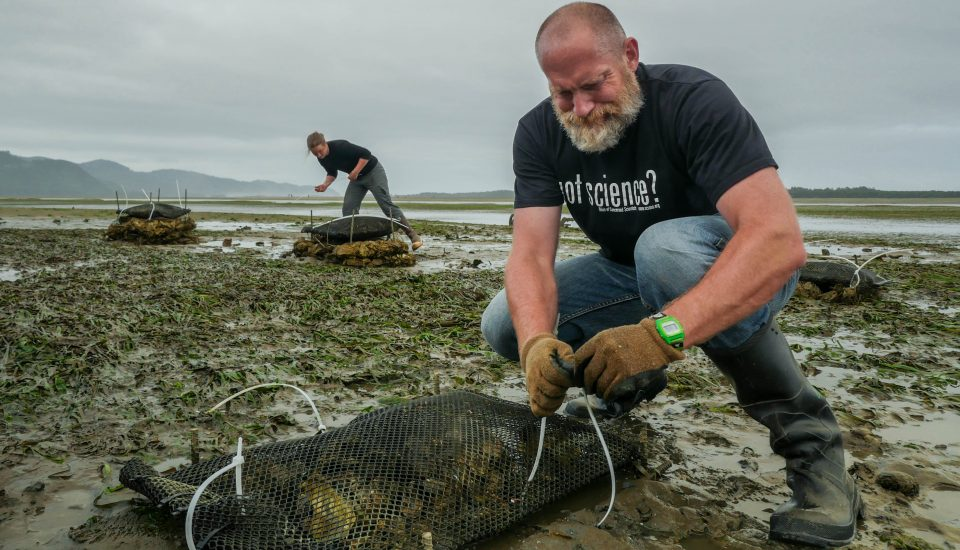 Oregon beard dude with oyster shells on beach