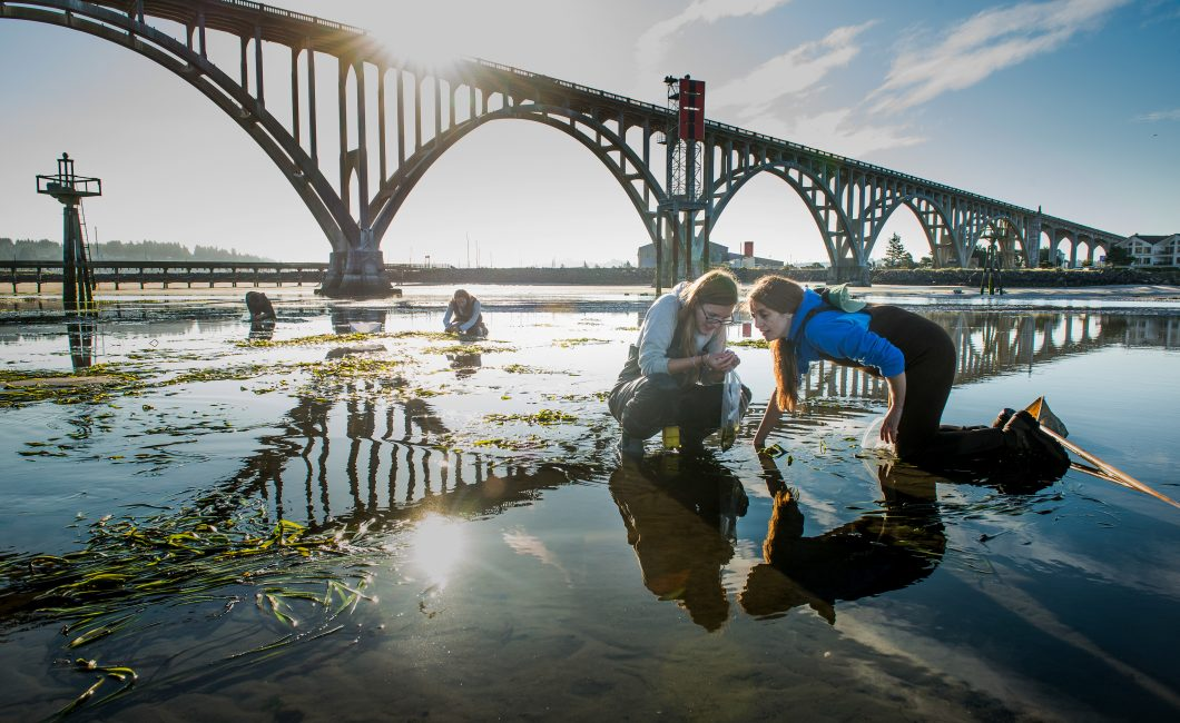 Oregon State University marine ecologist Fiona Tomas Nash (right) and research assistant Jen Motley and other field team members collecting invertebrates at low tide in Newport's Yaquina Bay.